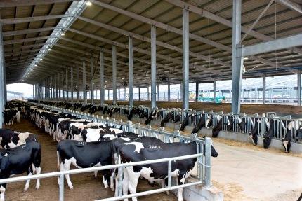 Trang trại TH Milk tại Huyện Nghĩa Đàn  tỉnh Nghệ An.