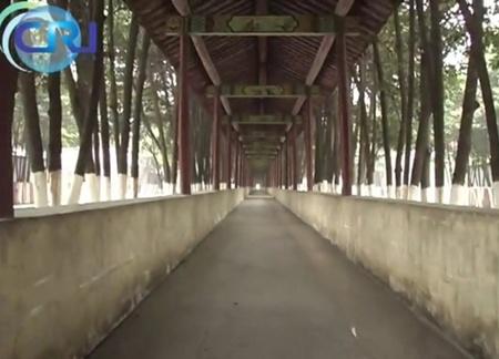 Để đảm bảo cho cư dân của Huaxi không bị ướt mỗi khi trời mưa, ông Bao cho xây dựng một hệ thống đường đi xung quanh làng.