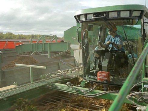 Đầu tiên là công đoạn thu hoạch khoai tây. Ở Canada, nguồn cung chủ yếu đến từ nông trại Leveque. Rất nhiều loại máy móc được đưa vào sử dụng. Đây là hình ảnh một công nhân đang thu hoạch khoai tây.