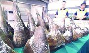 70% sừng tê giác ở Việt Nam là giả