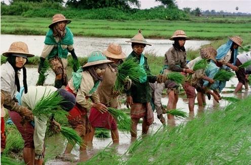myanmar 10 1367511297 500x0 Tìm hiểu về mỏ vàng tài nguyên tại Myanmar