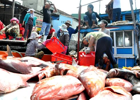 Nhiều tàu thuyền trúng đậm cá Hồng, cá Thu, cá Chuồn...thu lãi sau phiên biển cuối năm hàng trăm triệu đồng hứa hẹn đón tết Qúy Tý sung túc hơn nhiều năm trước.