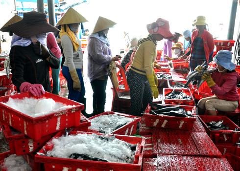 Không khí tất bật phân loại, sơ chế cá Chuồn ngay tại cảng Sa Kỳ.