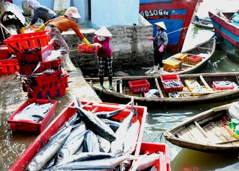 Các tiểu thương mua lại cá Chuồn của các chủ tàu đưa xuống ghe chở đi bán ở các chợ trong tỉnh.