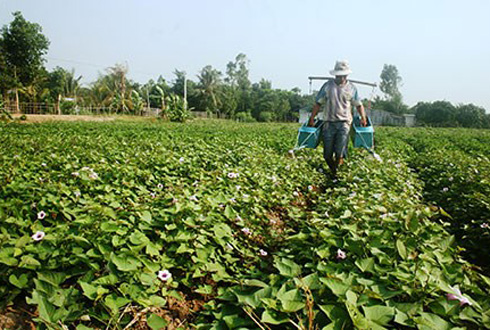 Chiêu thu mua nông sản lạ của thương lái Trung Quốc