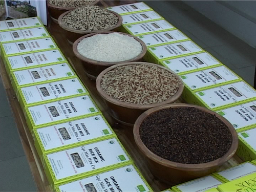 Làm giàu từ gạo hữu cơ