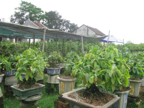 bonsai-1-JPG-8637-1399429738.jpg