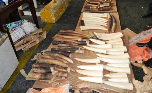 110 kg ngà voi Châu Phi 'bay' về Việt Nam