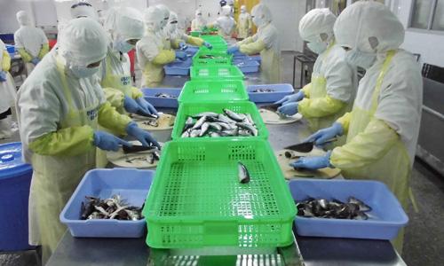 Doanh nghiệp điêu đứng vì công nhân bỏ thuốc chuột vào hàng xuất khẩu