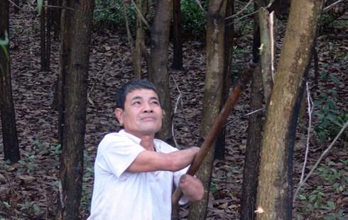 Chỉ với 2 cùi tay, ông Lãng đã trồng 20ha rừng tràm. Ảnh: Dân Việt.