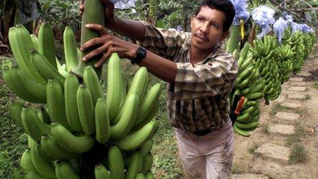 bananas-8974-1408260279.jpg