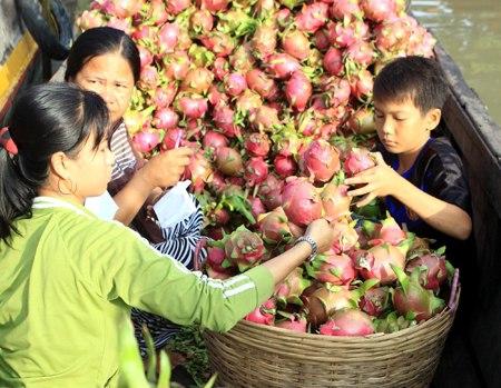 Trái cây đặc sản vẫn loay hoay tìm thị trường