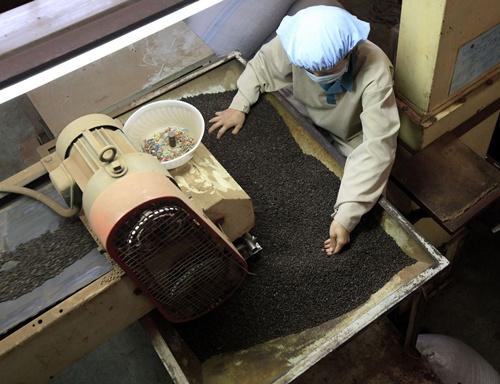 Bloomberg: Nhiều người Việt giàu lên nhờ hạt tiêu