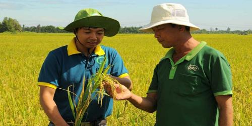 ITARICE nỗ lực đem đến những sản phẩm gạo sạch