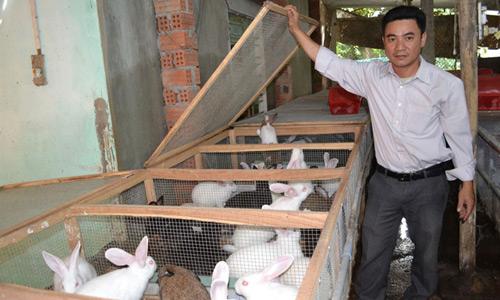 Kỹ sư cơ khí kiếm tiền tỷ từ trang trại thỏ