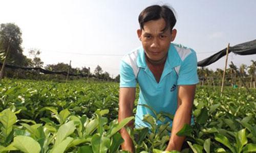 chanh-khong-hat-1571-1431212293.jpg