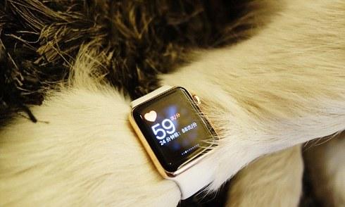 Con tỷ phú giàu nhất Trung Quốc mua Apple Watch cho chó