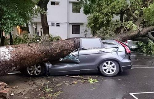 Xe thiệt hại vì siêu giông được bảo hiểm thế nào?