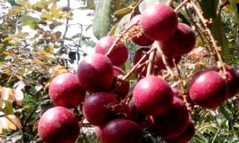 Trái cây lạ đắt khách