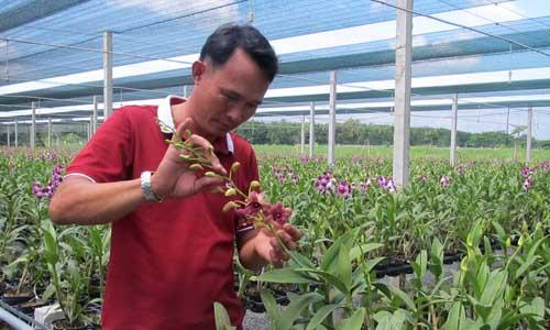 orchid-setop-8014-1440142333.jpg
