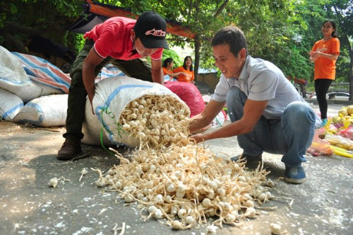 Hành, tỏi Lý Sơn bán đổ đống ở Hà Nội 3
