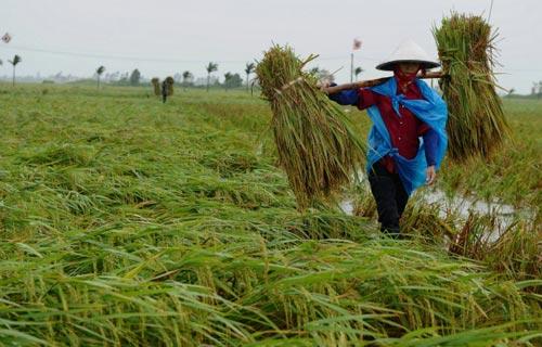 Nền nông nghiệp trong thế nút cổ chai