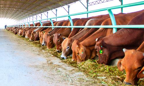 Nhiều khó khăn trong quản lý môi trường chăn nuôi
