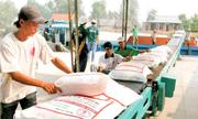 Năm 2015, Việt Nam xuất khẩu 6 triệu tấn gạo