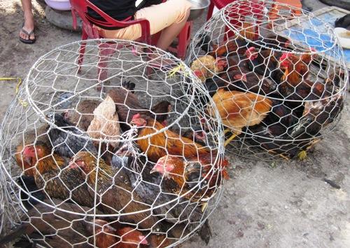 Thịt gà đắt hàng trước ngày ông Táo, đồ lễ chênh giá lớn