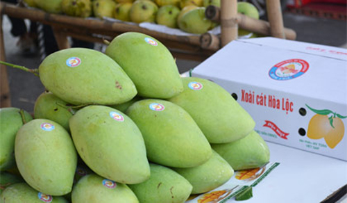 bao-gio-nuoc-mam-phu-quoc-thoi-dan-mac-made-in-thailand
