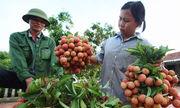 http://kinhdoanh.vnexpress.net/tin-tuc/vi-mo/nong-nghiep-viet-nam-tang-truong-am-3427280.html