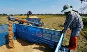 Nông dân Thái khốn đốn vì giá gạo