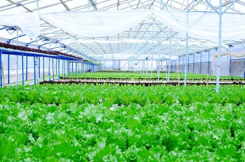 VinEco sẽ đầu tư trang thiết bị để ứng dụng công nghệ truy xuất nguồn gốc bằng mã QR, đảm bảo minh bạch hóa thông tin về địa điểm sản xuất, thời điểm thu hoạch.