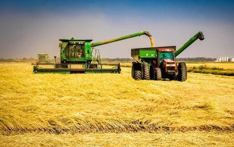 Dân Trung Quốc sắp được ăn gạo Mỹ lần đầu tiên