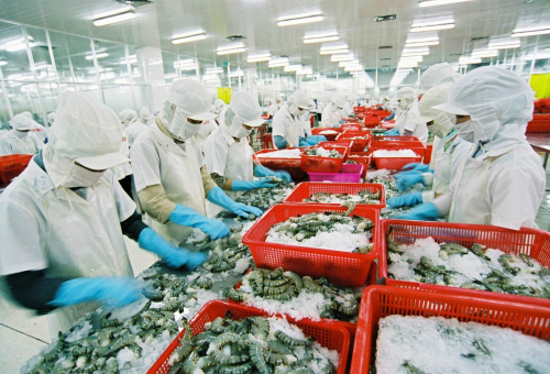 'Vua tôm' Minh Phú quay lại thị trường chứng khoán