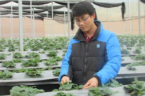 Chàng cử nhân 9X lãi nửa tỷ đồng mỗi năm từ trồng dâu tây - ảnh 1
