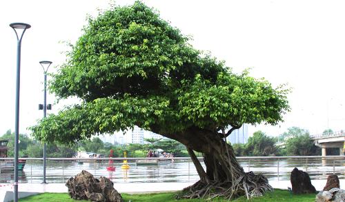 Dự án sở hữu nhiều cây cảnh độc lạ.