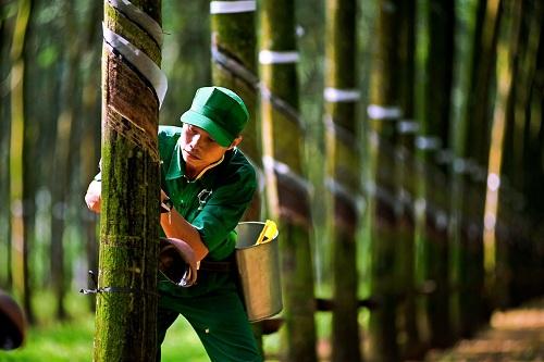 Không kinh doanh, doanh nghiệp Quảng Nam vẫn lỗ gần 900 tỷ đồng