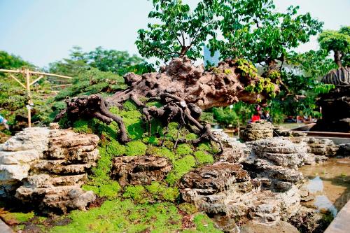 Cây cảnh tiền tỷ ở hội hoa xuân Phú Mỹ Hưng