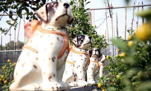 Nông sản độc đáo vào chậu cảnh chưng Tết