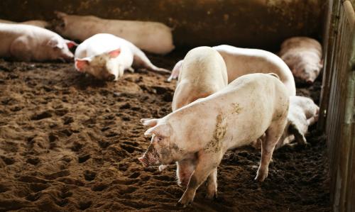Vĩnh Long có nhà máy thức ăn chăn nuôi 20 triệu USD