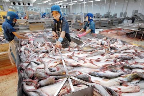 Tháng 1/2018xuất khẩu cá tra sang thị trường Trung Quốc đạt 42 triệu USD nhưng 44% là xuất qua đường tiểu ngạch.