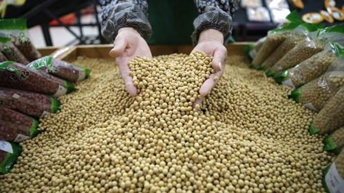 Công nhân một siêu thị tại Vũ Hán (Trung Quốc) đang kiểm tra đậu nành. Ảnh: Reuters