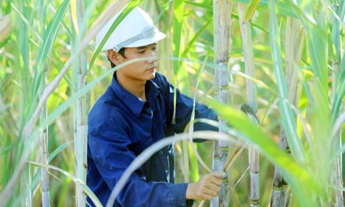 Doanh nghiệp lớn nhất ngành mía đường tăng trưởng đột biến