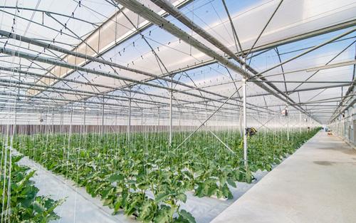 Bằng việc đưa vào vận hành nông trường thứ 15, Công ty VinEco tiếp tục khẳng định sự đầu tư nghiêm túc, bài bản và quy mô vào lĩnh vực nông nghiệp công nghệ cao. Doanh nghiệp tiên phong trong hành trình lan tỏa mô hình nông nghiệp sạch, ứng dụng công nghệ cao và góp phần cùng sự phát triển bền vững của nền nông nghiệp Việt Nam, đại diện doanh nghiệp cho biết.