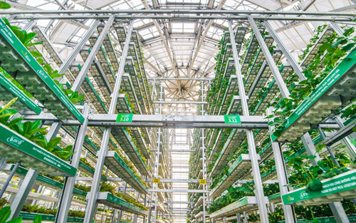 Nổi bật là mô hình thủy canh giá thể nhiều tầng Sky Green lần đầu tiên xuất hiện tại Việt Nam với những tính năng như tiết kiệm điện, tiết kiệm nước, tiết kiệm diện tích& Hệ thống gồm 60 tháp trồng có chiều cao khác nhau từ 3m, 6m đến 9m được phân bổ tại các vị trí phù hợp.