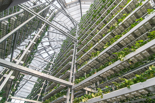 Mô hình này đang được áp dụng tại các nền nông nghiệp tiên tiến trên thế giới như Nhật Bản, Australia, EU, Mỹ... với ưu điểm là tối ưu diện tích và năng suất.