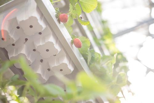 Bắt đầu triển khai từ tháng 10/2015, đến nay, VinEco đã xây dựng và phát triển thành công 15 nông trường với tổng diện tích sản xuất gần 3000 ha với nhiều phương pháp canh tác công nghệ nông nghiệp cao. Hiện mỗi tháng đơn vị này cung cấp ra thị trường hàng nghìn tấn nông sản với đa dạng chủng loại như rau ăn lá, rau ăn quả, rau ăn củ, rau gia vị, trái cây&