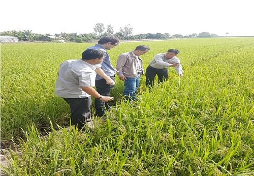 Chuyên gia Hà Lan và khuyến nông viên hướng dẫn nông dân cách thu thập và nhập liệu vào ứng dụng.