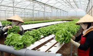 Nhiều hỗ trợ tài chính cho dự án nông nghiệp công nghệ cao